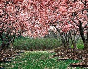 Розовый-Сад