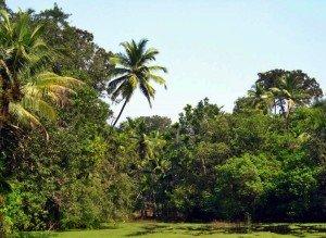 plantations_3b_(spice_plantations)